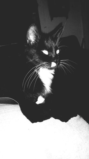RIP Zombie! We loved you! Such a great cat! First Eyeem Photo Cats Save A Life Adopt RIP :( Missing You Gone But Not Forgotten Furbaby Love Whiskers Wish You Did Have 9 Lives Loyal Momma Furry Friends Black And White Cuddlebug Home Friendly Zombie Against Animal Cruelty Save A Life