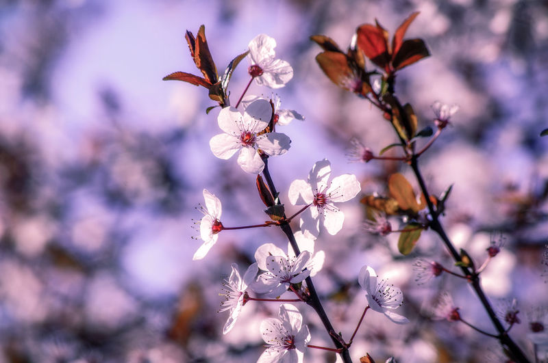 EyeEm Best Shots EyeEm Nature Lover EyeEmBestPics EyeEm Best Shots - Nature Beauty In Nature Wonders Of Nature Flower Tree Flower Head Branch Beauty City Blossom Springtime Defocused Close-up Flowering Plant Blooming Botany