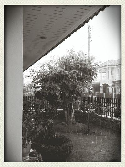 ฝน เท ลงมา . .