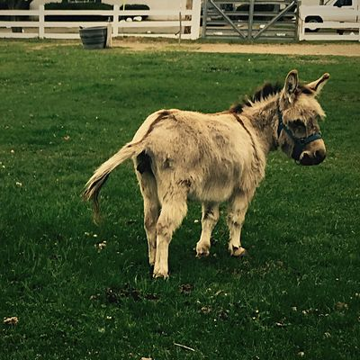Donkey Farm Wildlife