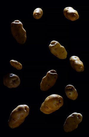 potatoes in dark background Black Background Close-up Day Indoors  Jellyfish No People Potatoes Sea Life Studio Shot Vegetable