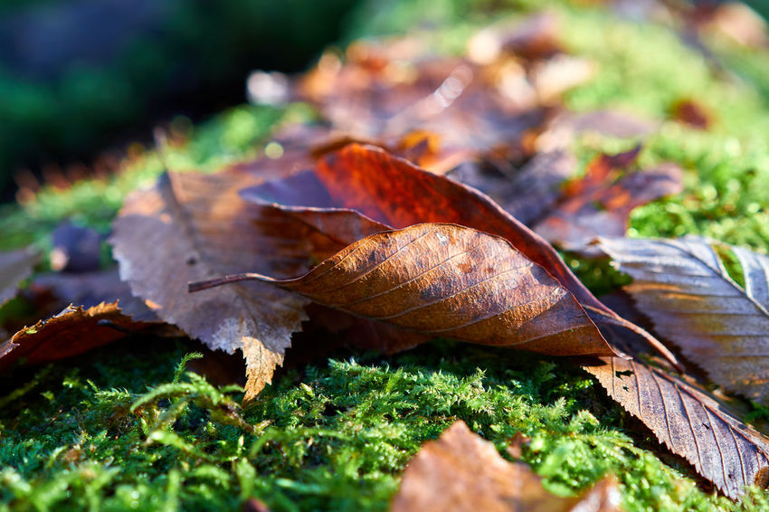 autumn in colors Green Color Colors Autumn In Colors Fall Fall Beauty Autumn Moss Tree Trunk Bokeh Depth Of Field Macro Lucky's Colors Detail Landscape Forest Mood Nature Close-up Leaf Beauty In Nature Fragility Outdoors Freshness