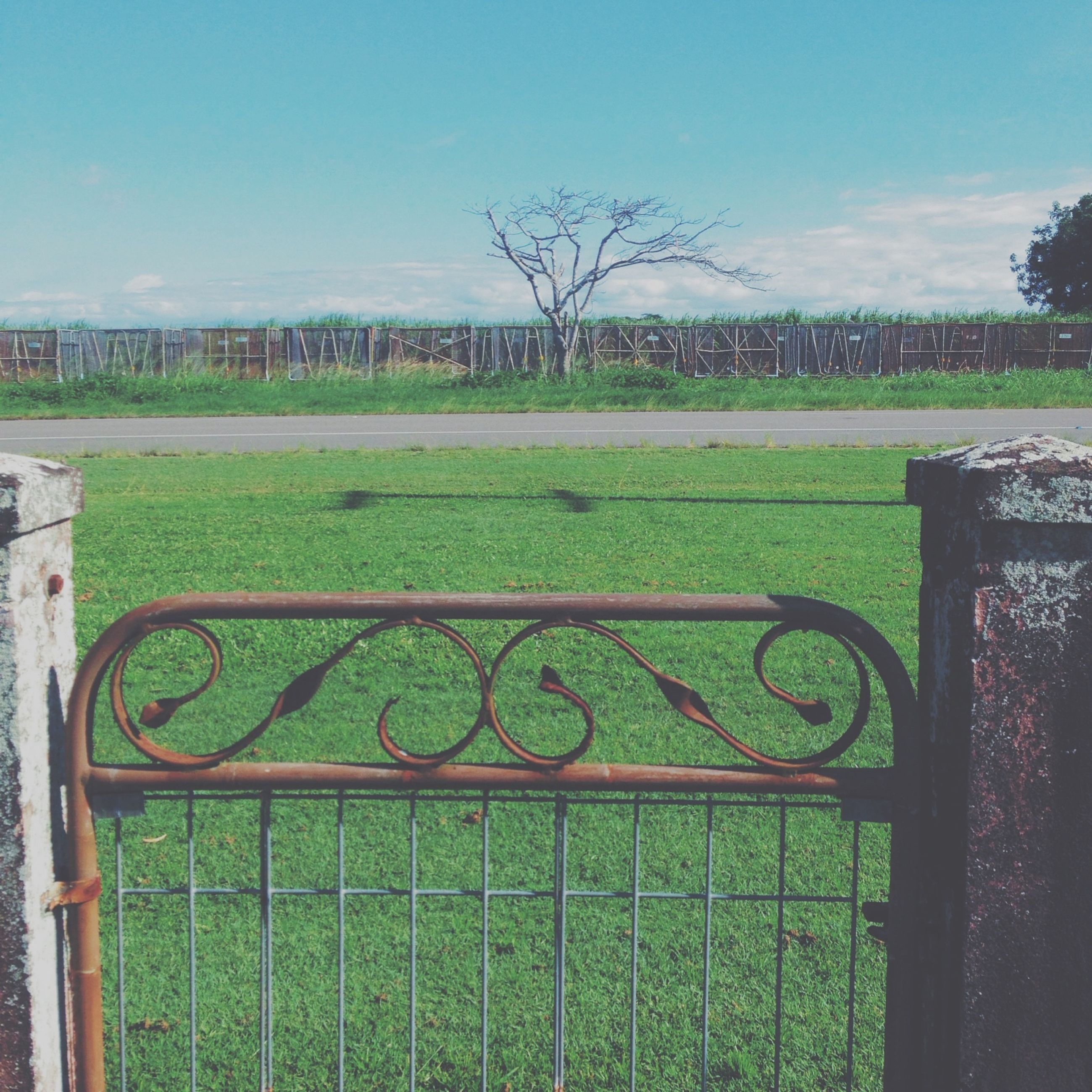 grass, field, fence, tree, green color, landscape, grassy, growth, tranquility, sky, nature, tranquil scene, beauty in nature, protection, plant, metal, day, park - man made space, scenics, safety