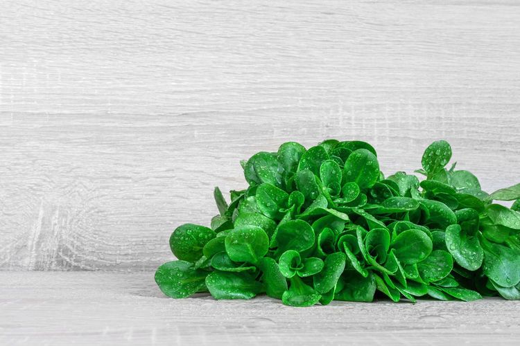 lamb's lettuce Close-up Corn Salad Freshness Freshness Green Green Color Lamb's Lettuce Leaf Salad Feldsalat