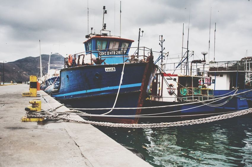 Boats Sealife Ocean Houtbay Capetown Southafrica