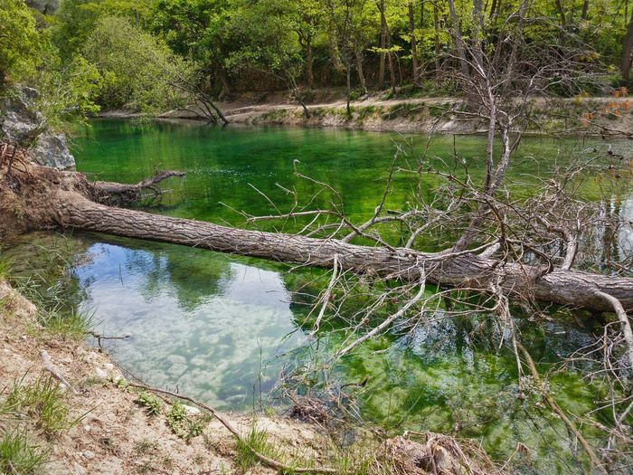 Water Nature Outdoors No People Day Tree Beauty In Nature Nature Tranquil Scene Tranquility Source Of Water Spring 2017 Spring Photography Beauty In Nature Tree River Reflection Spring Is In The Air Scenics Source Of Life Landscape Barranc De L'encantada Loch  Rural Scene Water Fountain Place Of Heart