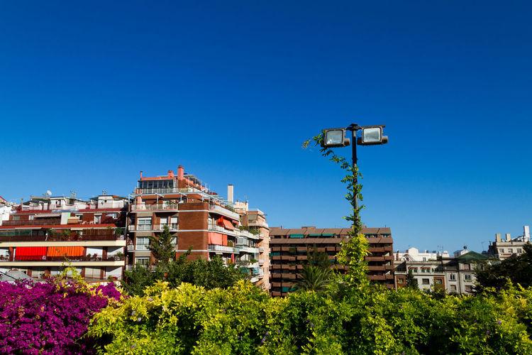 Plants in park against buildings in city