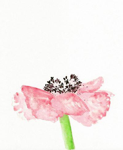 Illustration Art ArtWork Art, Drawing, Creativity Artist Artistic Artsy Drawing Flower Drawing Flower Art Poppy Poppy Flower Poppy Love Flower Flowerporn Flower Collection Flowerlovers Flower Power