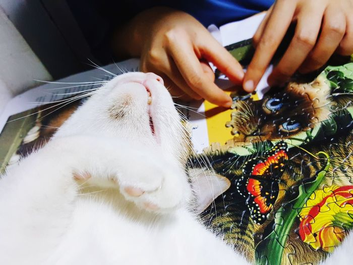 Mammal Animal Themes Human Hand Human Body Part Cat Jigsaw Jigsaw Puzzle Cobble Hills Indoors  One Person One Animal People Pets Lifestyles Adult Only Women Adults Only Day Close-up One Woman Only Cat♡ Cats Of EyeEm Jigsaw3D