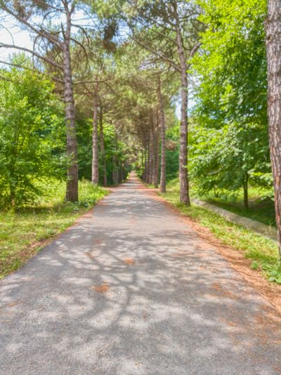 Tree The Way Forward Nature Road Outdoors Beauty In Nature Day Forest Green Color Scenics No People Tranquility Tranquil Scene Sunlight Tree Trunk Travel Destinations Growth Sky Atatürk Arboretumu Sarıyer AtaturkArboretumu Sarıyer Istanbul Turkiye Turkey
