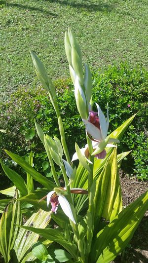 RePicture Growth Linda Vista, Coto Brus, Costa Rica Plant Nature Green Plant Life Garden Flowers Flower Ground Orchid Buds