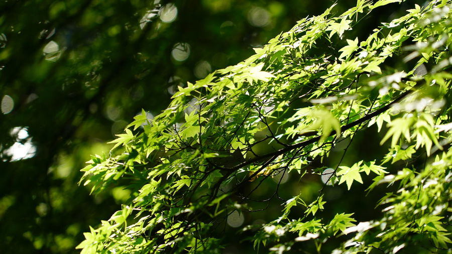 Beauty In Nature Branch Close-up Day Fragility Freshness Green Color Growth Leaf Nature No People Outdoors Plant Tree Leafs Leafs 🍃 New Life 記憶 Cooling  Rest Cool Resting Time
