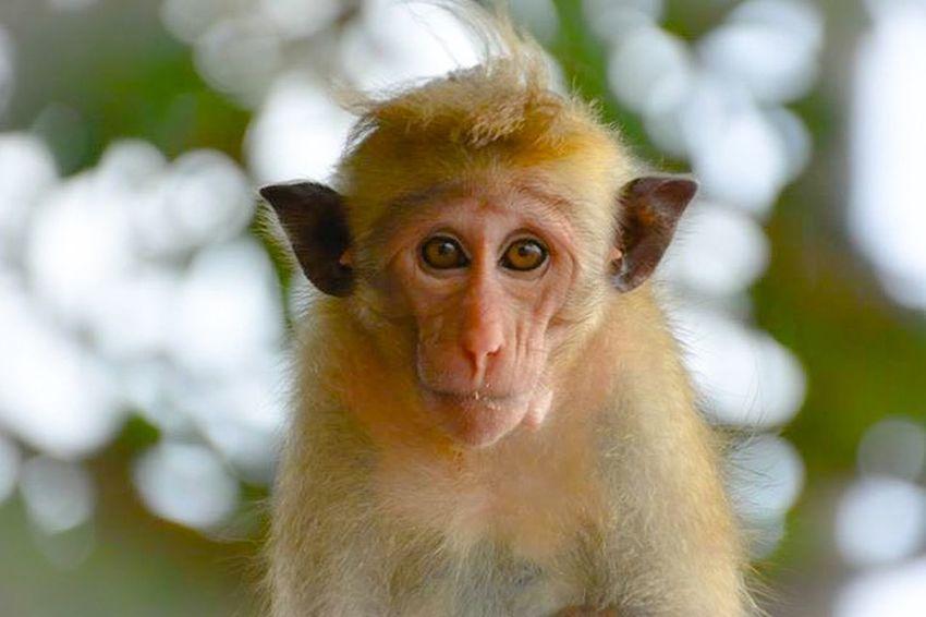 I left IG...I wanna share this cute buddy too here.I met him in Sri lanka last summer.He's a cute poser;right?😆 Adorable Cuteanimals Streamzoofamily Beautiful Nature Cuteness Monkey SriLanka Hikkaduwa Theportaitist2015eyeemawards Eyelovephotography