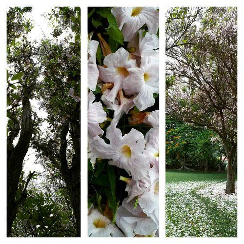 Waiohinu Park Naalehu Meditation Walk Trees Flowers Deep Breath Country Life KAU Hawaii USA