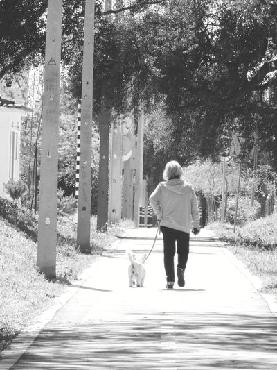 Rear view of man walking with dog