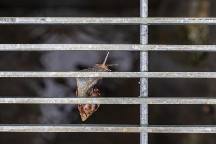 Close-up of an animal seen through metal fence