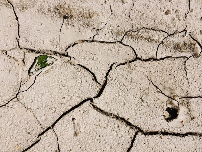 Structures & Lines Outdoors Resilience  Resillience Drought Difference, Distinction, Differential, Variation, Variance Contrast, Opposition, Opposite, Antithesis, Conflict, Contradistinction Structure