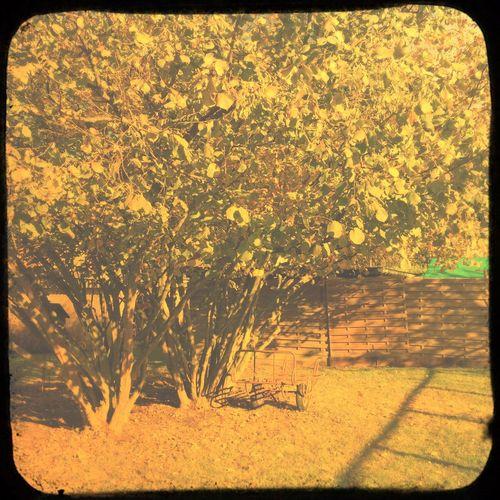 Autumn Colors First Eyeem Photo