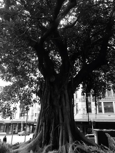 Check This Out Street Photography Old Tree Roots Of Tree So Big Middle Of The City Leaves_collection