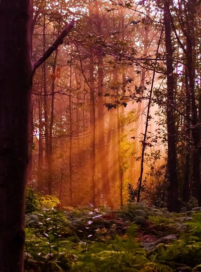 Through the forest Tree Nature Growth Forest No People Branch Beauty In Nature Tranquility Autumn Outdoors Day Sky Sunset Light And Shadow Light Through The Trees Light And Shadows Light Through Leaves Leaves Automn Forest Photography WoodLand Woodscapes Rayon De Soleil Forest Trees Into The Woods