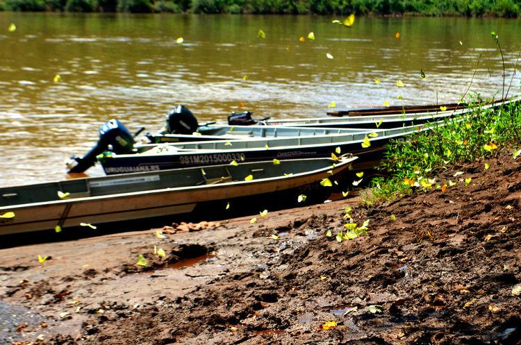 Uruguaisriver RioUruguai Ilhasdochafariz Brazil Brasilargentinabordiers Bordies Butterflies Boat River Culturaderio Culturadefronteira Fronteira Riograndedosul Argentina Regiaonoroeste