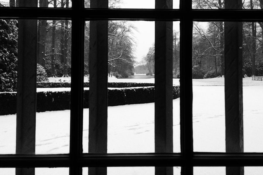 Tree Window No People Winter Outdoors Bare Tree Snow Nature Blackandwhite Blackandwhite Photography Contrast