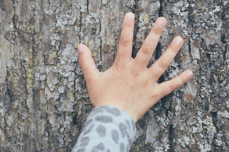 Close-up of hand touching tree trunk