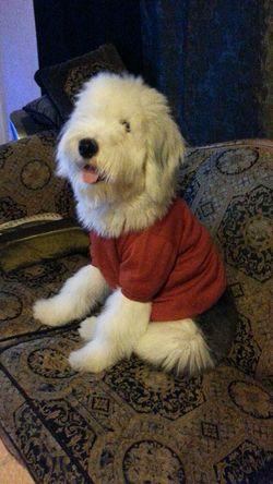 엄마가 니키한테 니트를 입혀줬는데 잘 맞는당 I Love My Dog