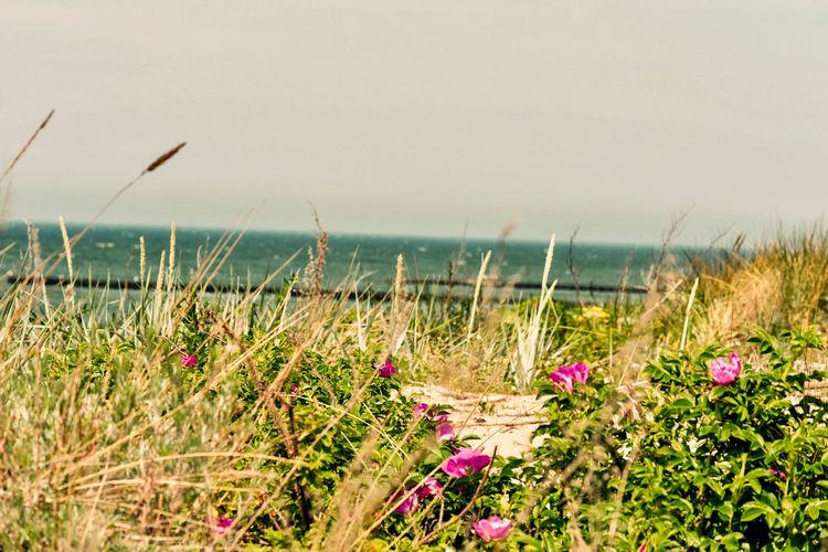 Baltic Sea