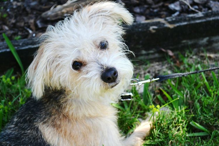 Pets Corner Puppyeyes Puppy Love Puppy Dogs Cute Pets Dog Pets Domestic Animals No People One Animal Close-up Outdoors Portrait Animal Themes