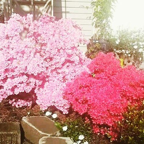 I luv flowers