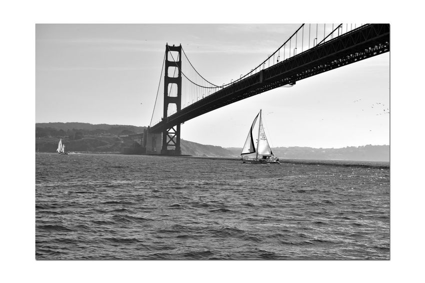 Sailing Aboard The Alma 3 Scow Schooner Built 1891 Wooden-hulled Flat-bottomed 80 Ft. The Alma Sailing San Francisco Bay Sailboats Golden Gate Bridge Sailboat Beneath Bridge Bnw_friday_eyeemchallenge Bnw_water Monochrome_Photography Monochrome Black & White Black & White Photography Black And White Black And White Collection  Hills Of San Francisco Birds In Flight Scenic Bridge Tower Bridge Span