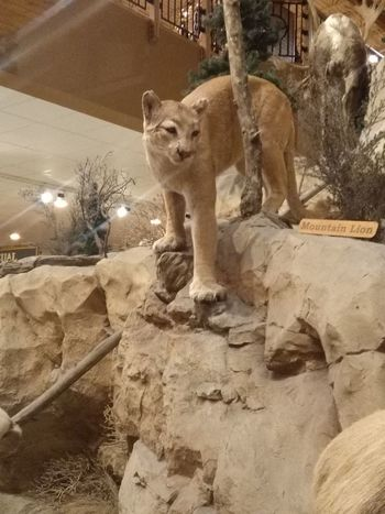 just a typical day out Mountain Lion Dangerous Animals Animal Themes No People Day Outdoors Nature
