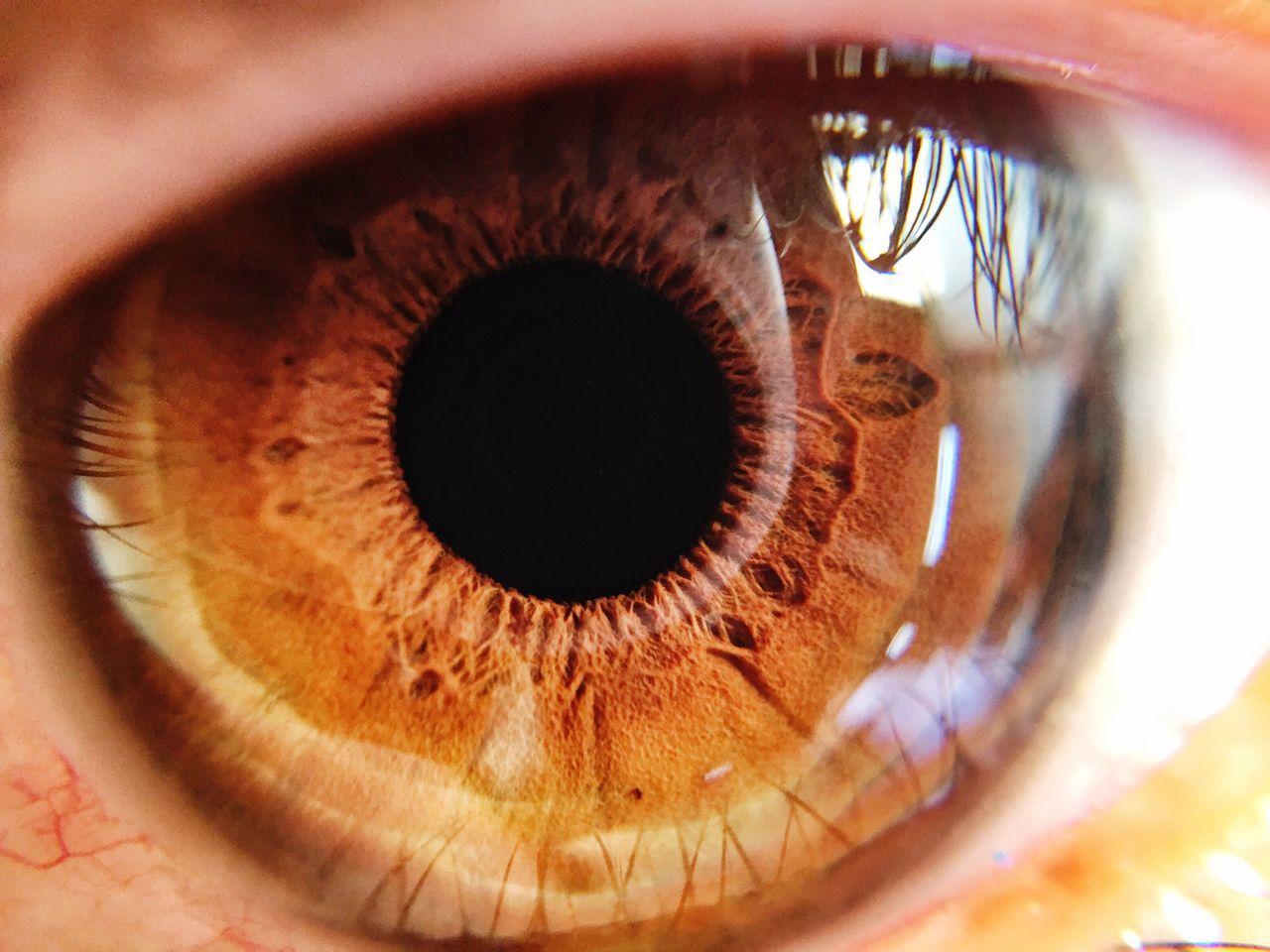 human eye, eyelash, eyesight, sensory perception, eyeball, human body part, iris - eye, one person, reflection, real people, macro, close-up, outdoors, day, people