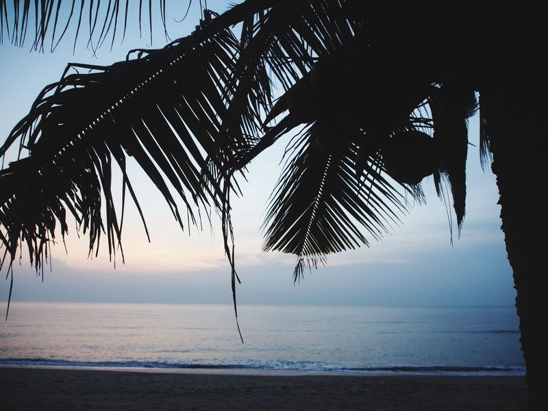 Sea Horizon Over Water Scenics Sky No People Tranquility Beauty In Nature Palm Tree Water Nature Tranquil Scene Beach Outdoors Day Palm Frond Coconut Trees Coconuts Coconut Trees And Beaches Coconut Trees By The Beach