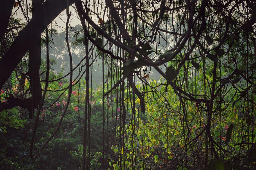 Nature Photography Snapseed Editing  India Rookiephotographer