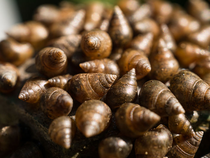 Macro and selective focus many beautiful small shells river on steel pipe from thailand. Abstract Background Beauty In Nature Brook Brown Closeup Cone Design Ecology Gastropod Group Invertebrate Mollusk Natural Rare River