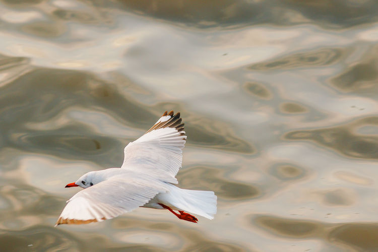 View of seagull flying over lake