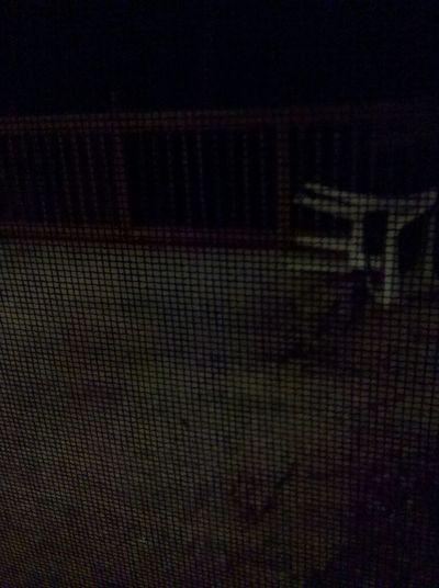 Snow (: