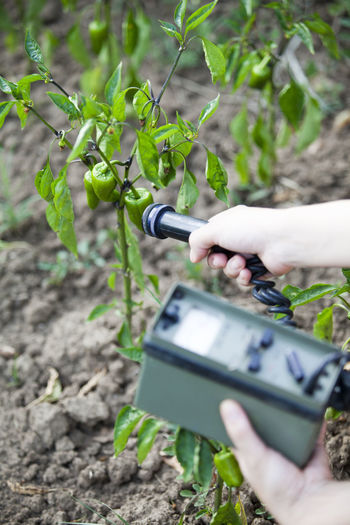 Cropped hand of person examining vegetable growing in farm