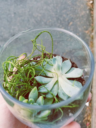 Summer Succulents🌱 Cacti Plants Greenhouse Cactus NYC NY Aesthetic Summer Plantlovers Succulents Plantlove Houseplants Urbanjungle Greenery Flowers Colorful Leaf Close-up Plant Green Color Succulent Plant
