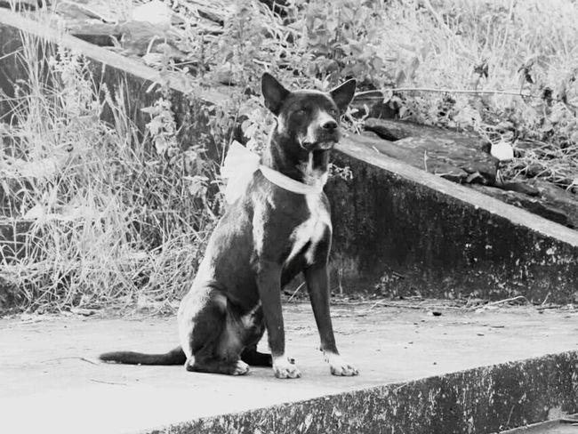 Taking Photos Pet Photography  Pet Love Petlover Myhero❤ Dog❤ Doggy Pet Pet Life  Pet Portrait