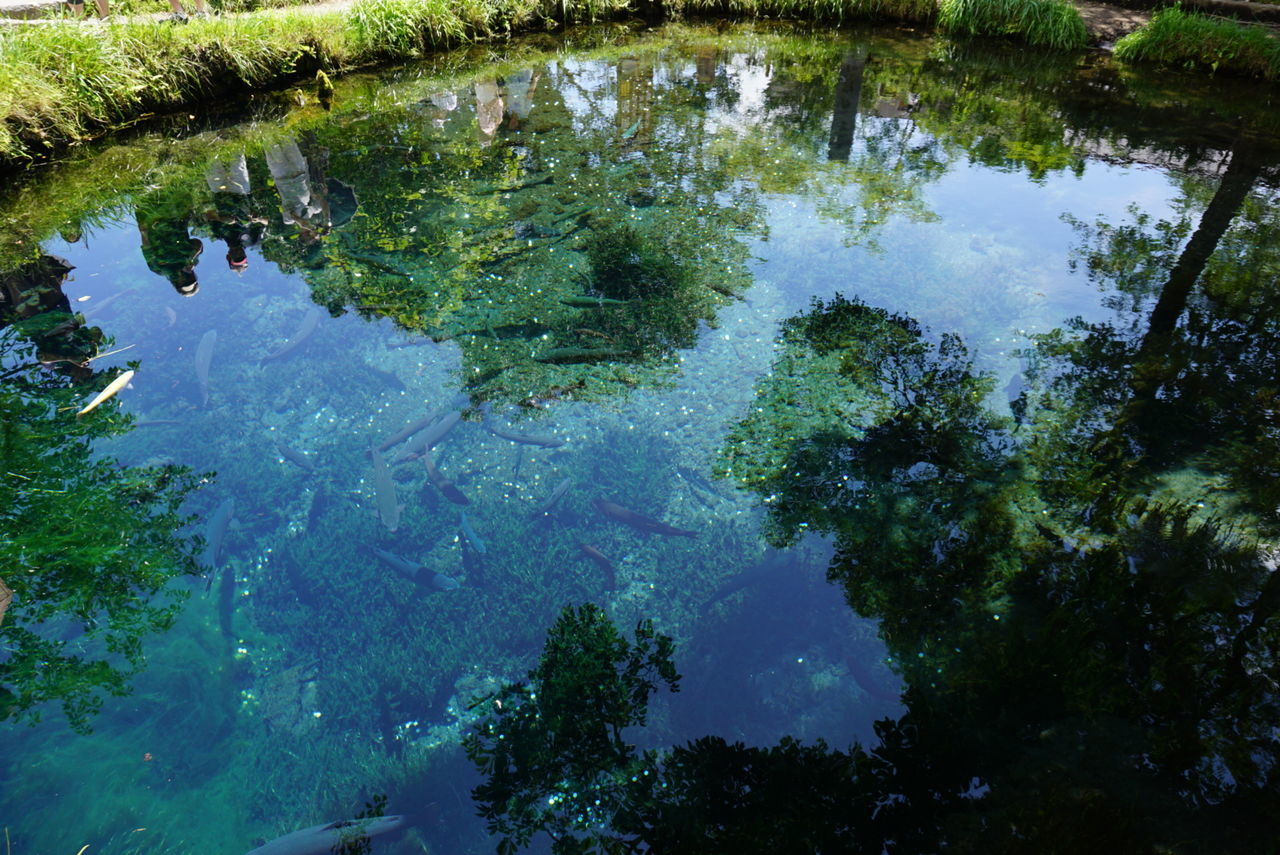 High Angle View Of Reflection On Pond In Park