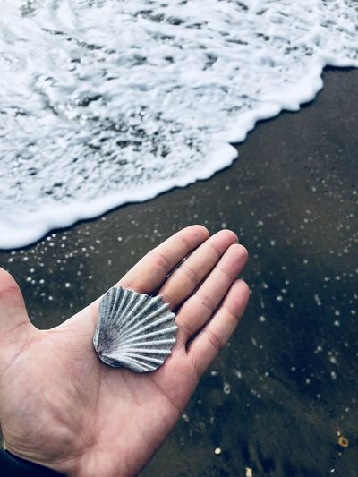 Cropped hand of person holding seashell at beach