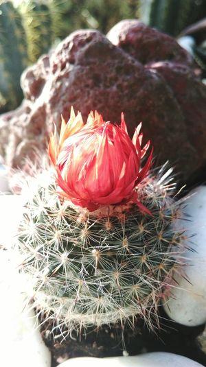 Kaktus Perfect Numberone :)))
