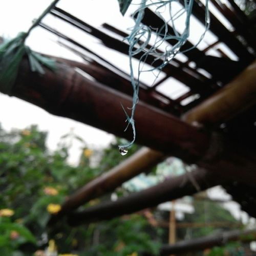 Clicks Monsoonshowers Drop