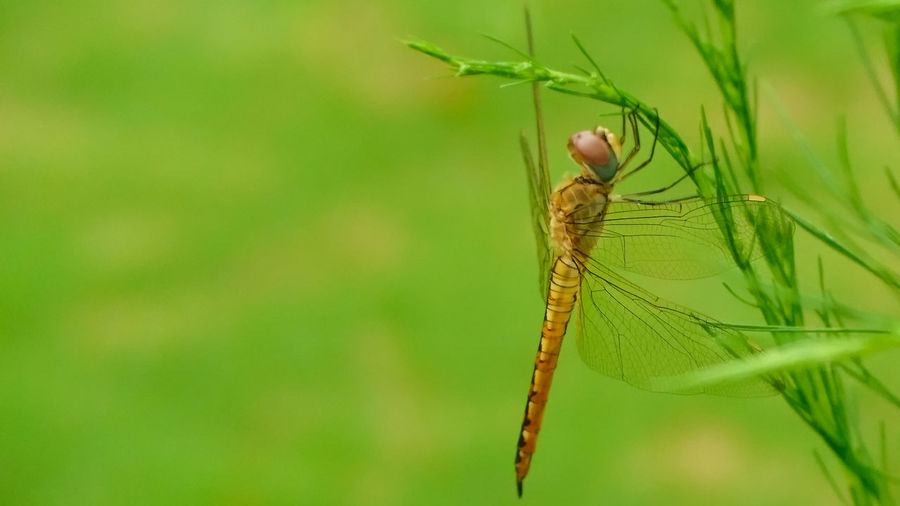 Dragonfly Damselfly Insect Animal Themes Close-up Dragonfly Animal Wing Flapping Spread Wings Splashing Droplet Fly
