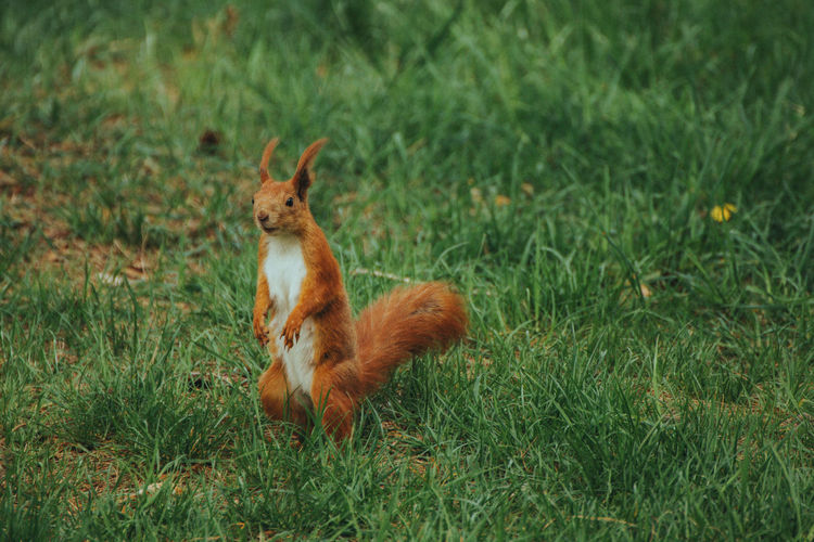 View of a squirrel on field