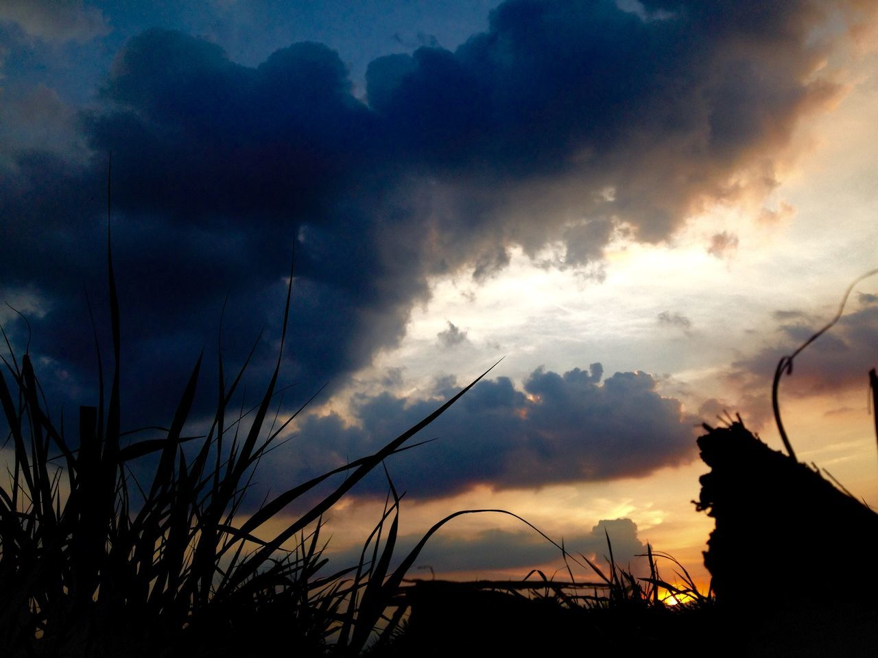 sky, sunset, silhouette, cloud - sky, plant, tranquility, beauty in nature, cloudy, cloud, tranquil scene, nature, scenics, growth, dusk, idyllic, dramatic sky, grass, atmospheric mood, outdoors, weather