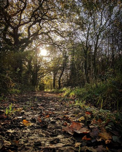 Nature Tree Tranquility Beauty In Nature Tranquil Scene Outdoors Autumn Scenics Landscape Perspectives On Nature Shropshire Landscape Shropshire Countryside English Countryside Beauty In Nature Walking In The Woods Light And Shadow Light Effect